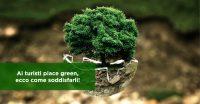 Ai turisti piace green, ecco come soddisfarli!